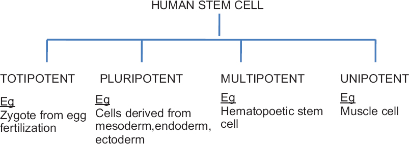 Figure 1: Classification of stem cell based on differentiation potential